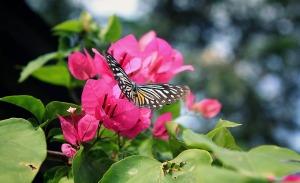flower-1720611_1920