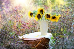 sunflowers-1719119_1920